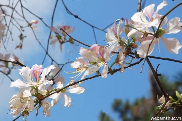 Hình 3 – Hoa ban thường nở rộ vào tháng 3 hằng năm
