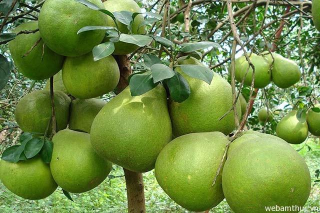 Hình 8 – Những trái bưởi Tân Triều ngọt nước